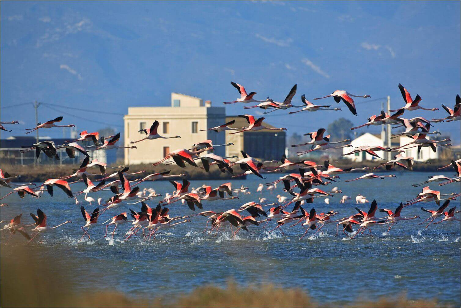 view building with flamingos flying